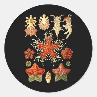 Star Fish Classic Round Sticker