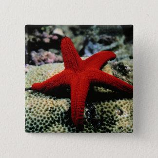 Star Fish   Red Sea 15 Cm Square Badge