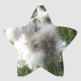 "Star Stickers - English Angora Rabbit ""Bradley"""