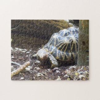 Star Tortoise Puzzle