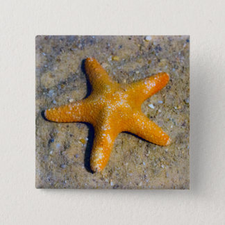 Starfish in the Sand 15 Cm Square Badge