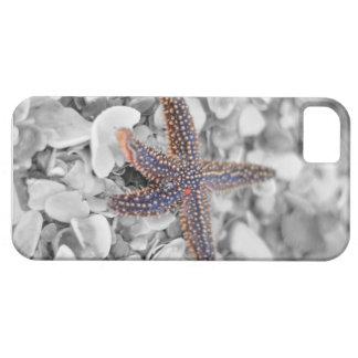 Starfish iPhone 5 Cases