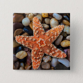 Starfish On Rocks 15 Cm Square Badge