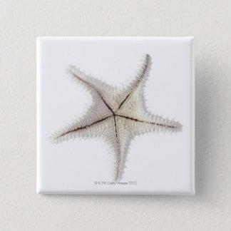 Starfish skeleton, close-up 15 cm square badge