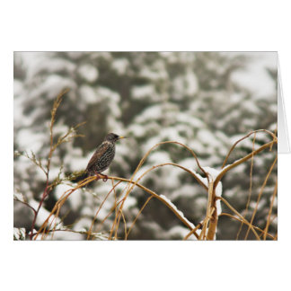Starling bird in the Snow Card