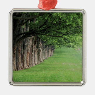 Stately row of trees, Louisville, Kentucky. Christmas Ornament