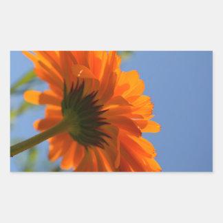 Sticker with Orange Gerbera Daisy