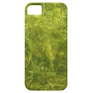 stingray case for the iPhone 5