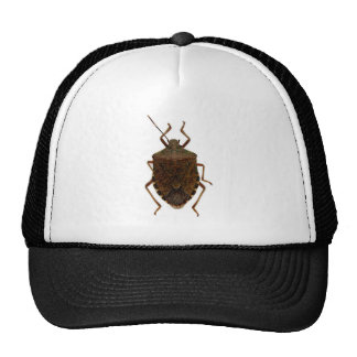 Stink Bug Cap
