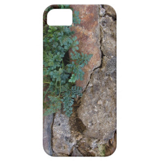Stone with Planze iPhone 5 Covers