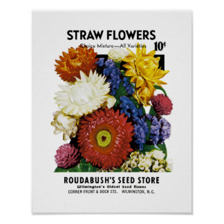 Straw Flowers Seed Packet Label Poster