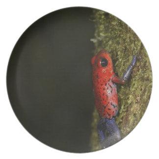 Strawberry Poison-dart frog (Dendrobates Plate