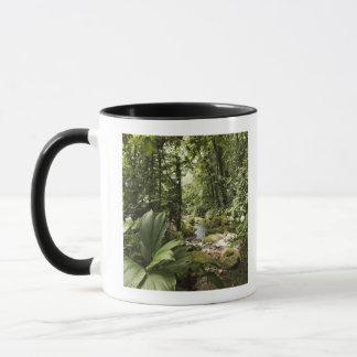 stream in rainforest, Dominica Mug