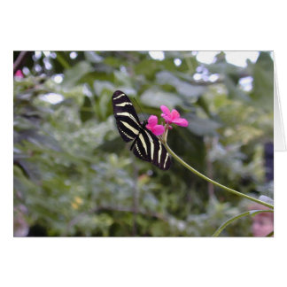 Striped Butterfly Card