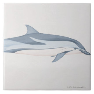 Striped Dolphin Tile