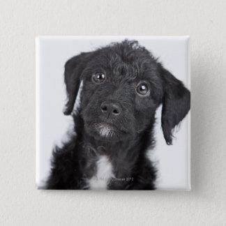Studio portrait of black jack-a-doodle 15 cm square badge