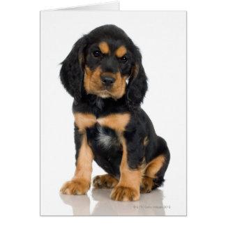 Studio portrait of Rottweiler puppy Card