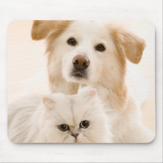 Studio shot of cat and dog mouse pad