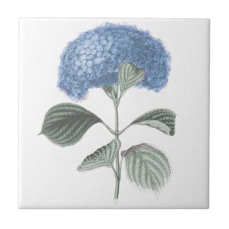 Stunning Blue Hydrangea Flower Tile