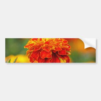 Stunning Orange Marigold Bumper Sticker