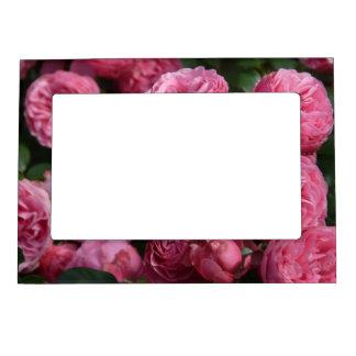Stunning Pink Roses Magnetic Frame