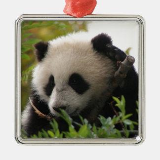 Su Lin, giant panda bear cub at the San Diego Zoo Christmas Ornament