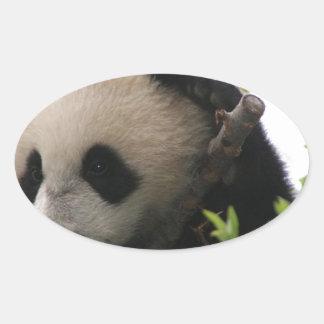 Su Lin, giant panda bear cub at the San Diego Zoo Oval Sticker