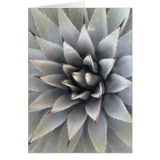 Succulent Greeting Card, envelopes included Greeting Card