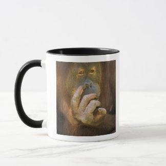 Sumatran Orangutan, or pongo pygmaeus abelii. Mug