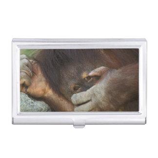 Sumatran Orangutan, Pongo pygmaeus Business Card Holder
