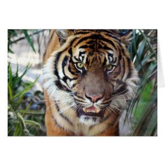 Sumatran Tiger Card