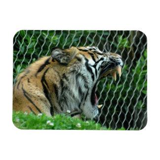 Sumatran Tiger Magnet