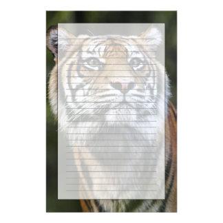 Sumatran Tiger (Panthera tigris sumatrae) Stationery