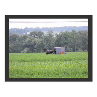 ~ Summer in Lancaster County ~ 6 Postcard