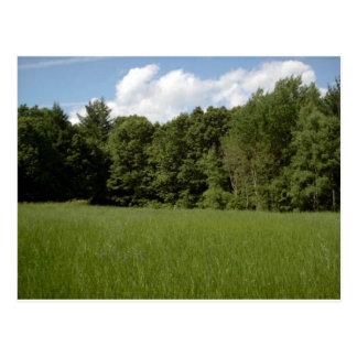 Summer Meadow Postcard