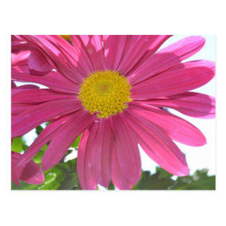 Summer Pink Flower Postcard