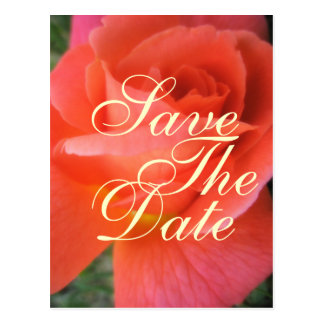 Summer rose save the date wedding announcement postcard