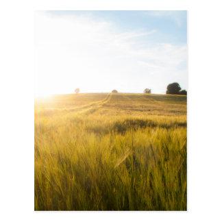 Sun over wheatfield postcard