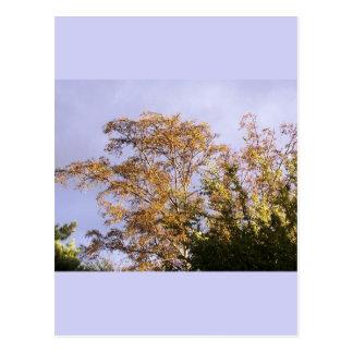 sun shining through birch postcard