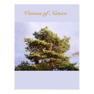sun shining through pine postcard