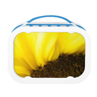 Sunflower 175 lunch boxes