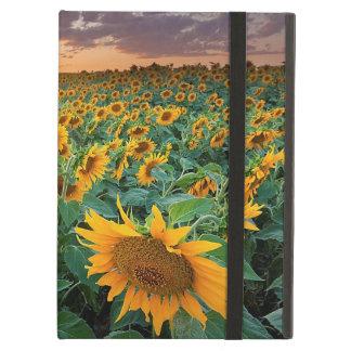 Sunflower Field in Longmont, Colorado iPad Air Case