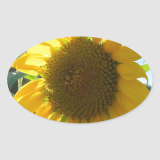 Sunflower in the garden oval sticker