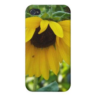 Sunflower iPhone Case iPhone 4 Case