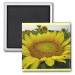 Sunflower Series Magnet