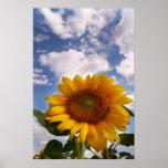 Sunflower Sky Print