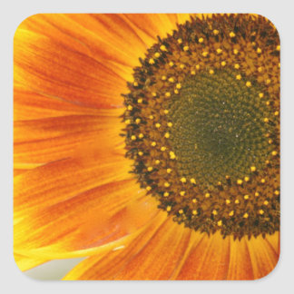 Sunflower Square Sticker