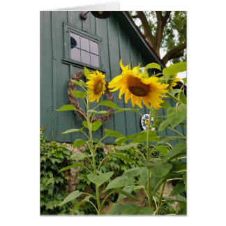 Sunflowers and green barn, envelope included card