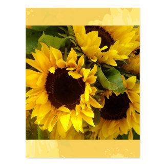 Sunflowers Postcards