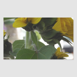 Sunflowers Rectangular Sticker